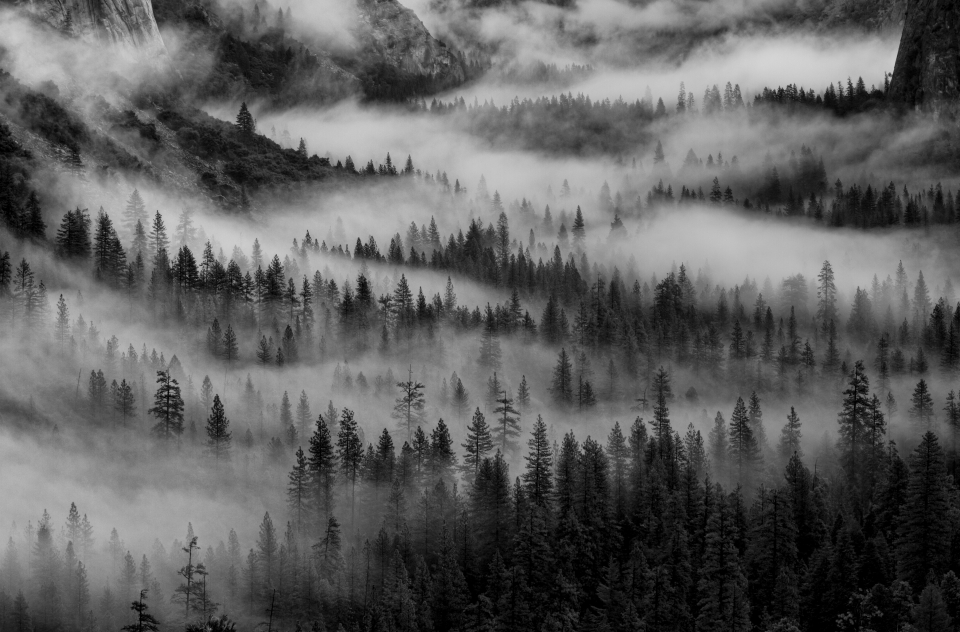 Fog rolls through the forest in Yosemite
